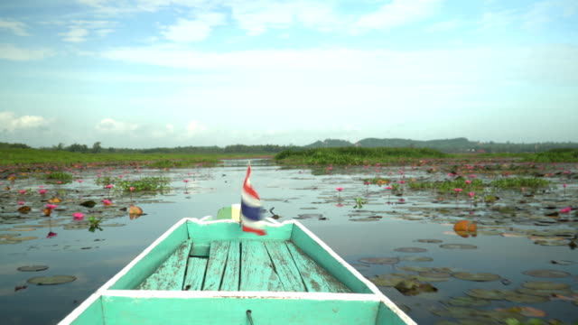heading to pink lotus in wetlands thale noi - lagoon stock videos & royalty-free footage