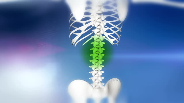 stockvideo's en b-roll-footage met hd: healing of a backache - thoracic cavity