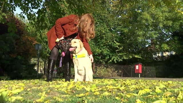 Health and Work Green Paper announced ENGLAND EXT Various shots Emily Davison along in park with guide dog Emily Davison interview SOT It's trying to...