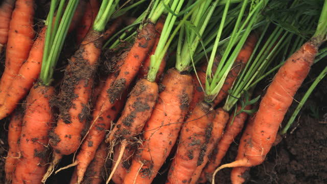 health grown in garden - carrot stock videos & royalty-free footage