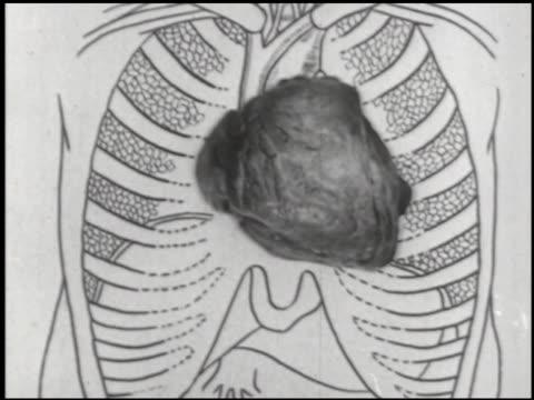 health-o-grams - 2 of 10 - この撮影のクリップをもっと見る 2341点の映像素材/bロール