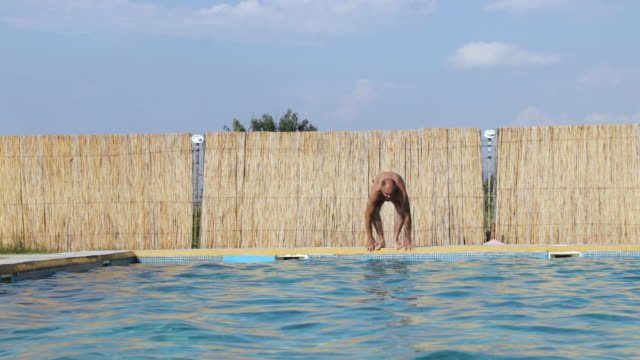 healthy active senior man swimming in outdoors pool - amateur stock videos & royalty-free footage