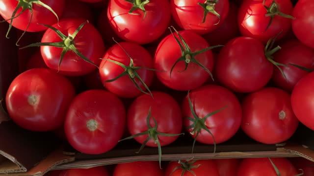 健康的なダイエット - ベジタリアン料理 - 沢山の物点の映像素材/bロール