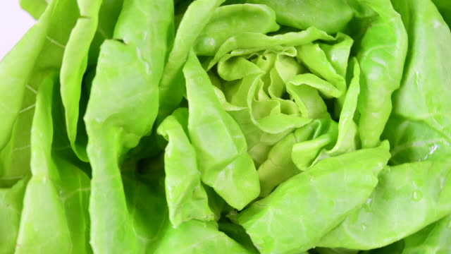 stockvideo's en b-roll-footage met healthy eating: fresh boston lettuce in food display-close up - supersensorisch