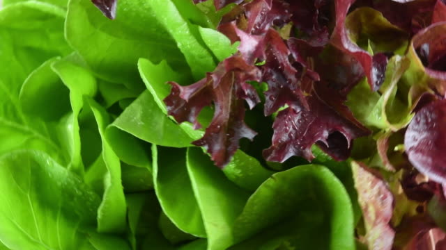 healthy eating: raw boston lettuce and red leaf lettuce, close up - butter lettuce stock videos & royalty-free footage