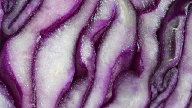 vidéos et rushes de healthy food: zoom in to the pattern of a red cabbage, macrophotography - macrophotographie