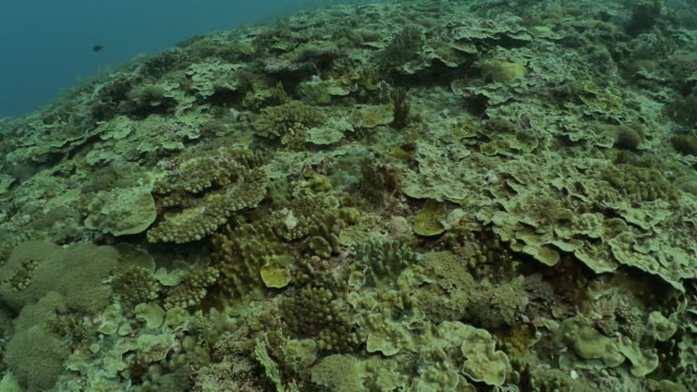 healthy hard coral reef undersea in orchid island, taiwan - scuba diver point of view stock videos & royalty-free footage