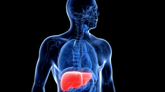 healthy liver - human liver stock videos & royalty-free footage