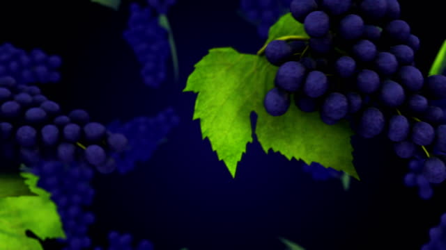 vídeos de stock e filmes b-roll de healthy organic grapes rotating and transition with luma matte alpha channel - seamless loop - stock video - juicy