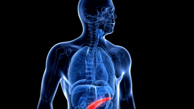 healthy pancreas - human internal organ stock videos & royalty-free footage
