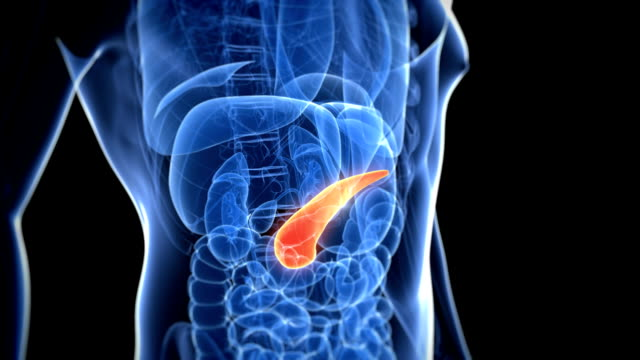 healthy pancreas - biomedical illustration video stock e b–roll