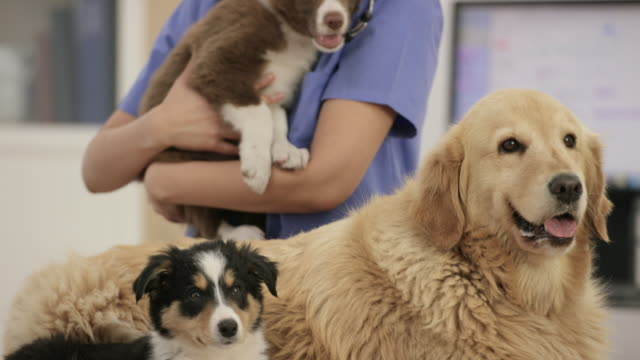 healthy pets - animal hospital stock videos & royalty-free footage