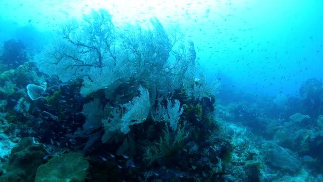 健康海ファン サンゴ海底 - ゴーゴニアンコーラル点の映像素材/bロール