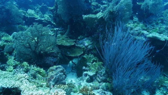 Gezonde onderzeese koraalrif