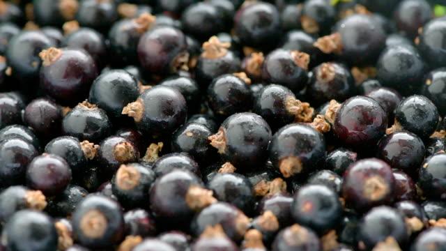heap of blackcurrant berries