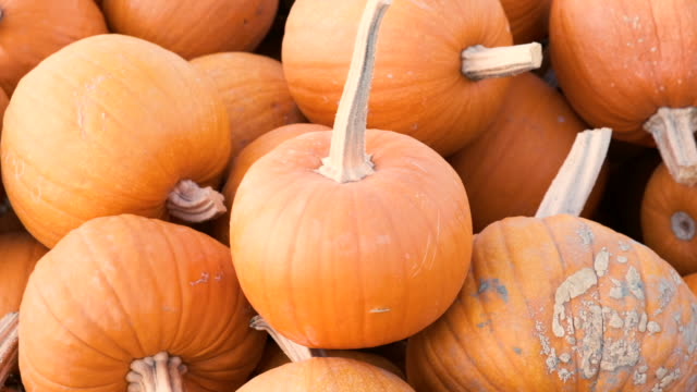 heap of pumpkins for sale in a pumpkin patch - gourd stock videos & royalty-free footage