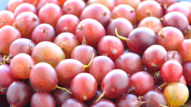 Escolhas de maduras vermelhas Groselhas espinhosas