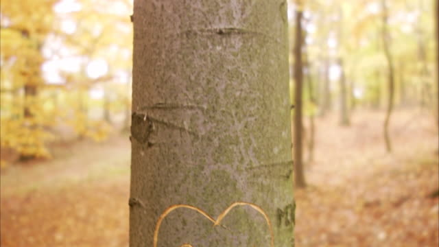 A heart carved on a tree trunk Sweden.