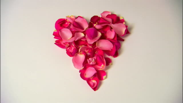 A heart of rose petals is blown away to a white background.