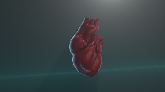 heart scan - anatomy stock videos & royalty-free footage