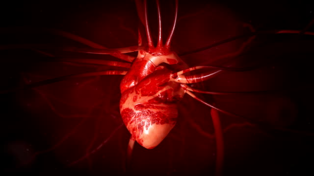 heartbeat close-up di animazione con le vene e arterie - vena video stock e b–roll