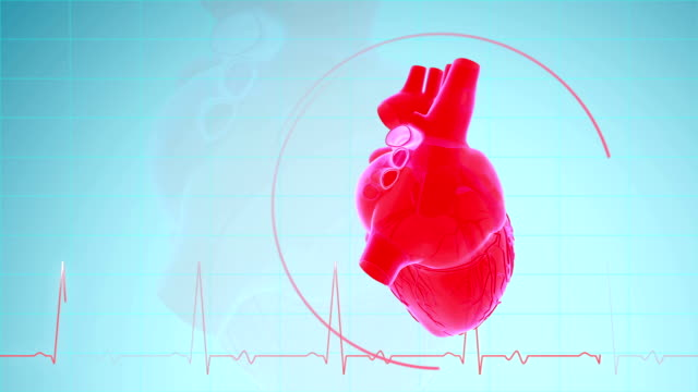 heartbeat with pulse waveform - anatomy stock videos & royalty-free footage