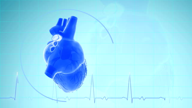 heartbeat with pulse waveform - blood vessel stock videos & royalty-free footage