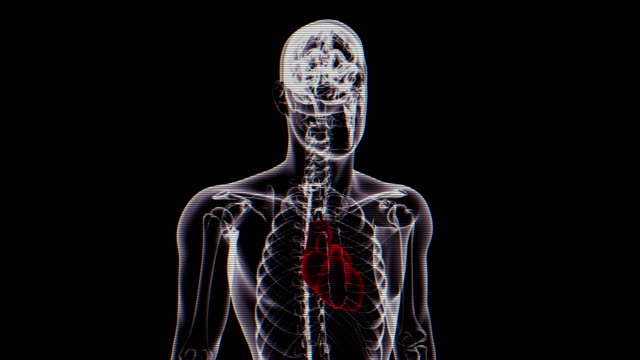 hearth | x-ray of human body - loopable - cerebrum stock videos & royalty-free footage