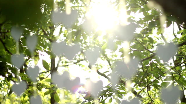 hearts dekoration in tree - schnur stock-videos und b-roll-filmmaterial