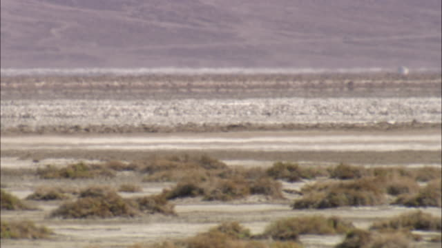 heat shimmers off a desert road in death valley, nevada. - nevada stock videos & royalty-free footage