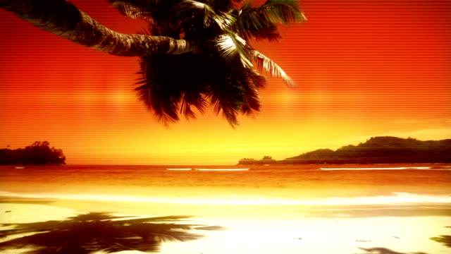 heat tropical beach - tropical tree stock videos & royalty-free footage
