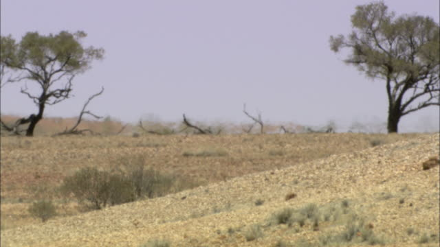 heat waves move through a desert landscape. - outback stock videos & royalty-free footage