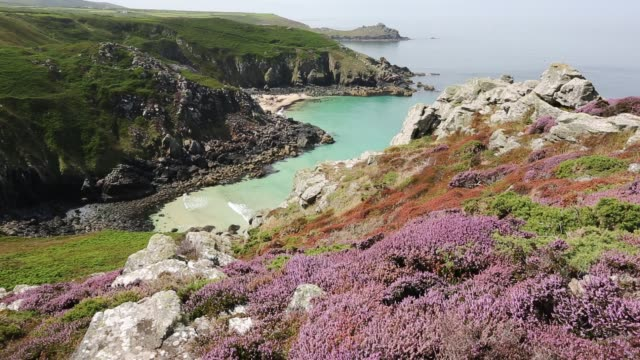 Heather and Gorse flowering on the cliff tops at Zennor in Cornwall, UK, looking down on Pendour Cove.