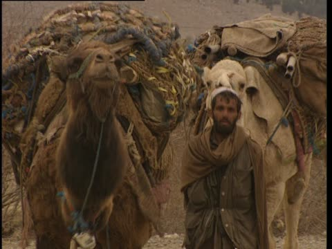 stockvideo's en b-roll-footage met heavily laden camels are led along a dirt road. - werkdier