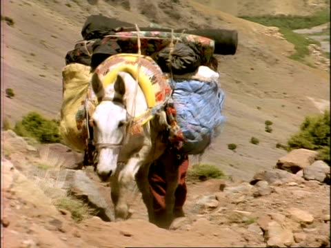 ms heavily laden horse walking up rocky path, to camera, morocco, africa - mule stock videos & royalty-free footage