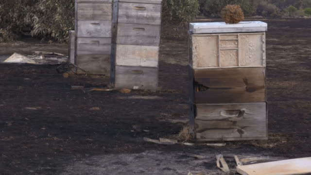 """heavily-burned beehives on kangaroo island after intense bush fires - """"bbc news"""" stock videos & royalty-free footage"""