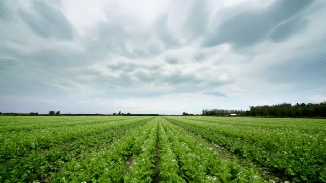 T/L, WS, Heavy clouds above potato field, New Zealand