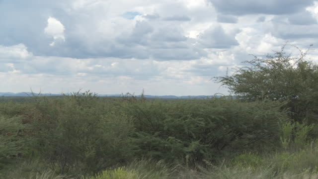 heavy clouds hang over scrub land in namibia. - shrubland stock videos & royalty-free footage
