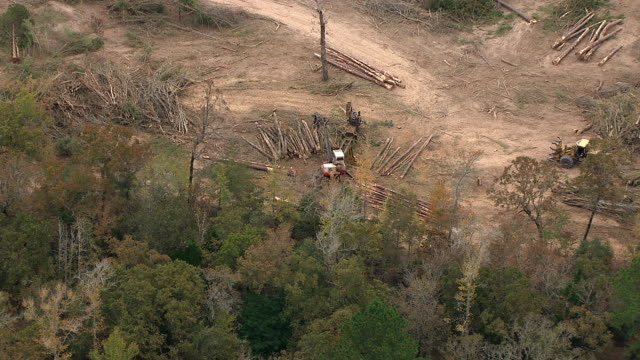 Heavy equipment stacks cut trees at a logging operation.
