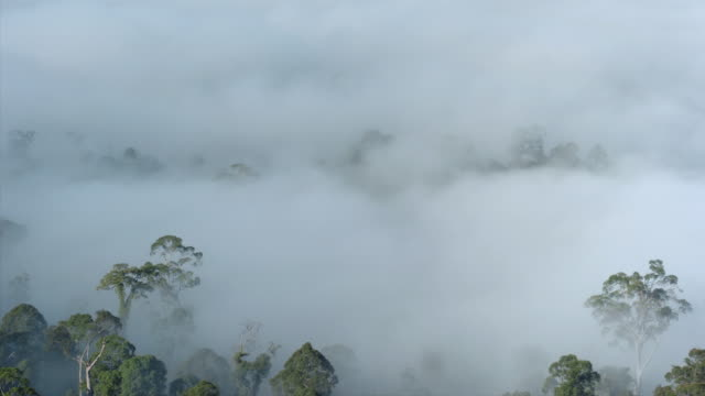 Heavy fog and clouds obscure a forest in the Danum Valley, Borneo. Available in HD.