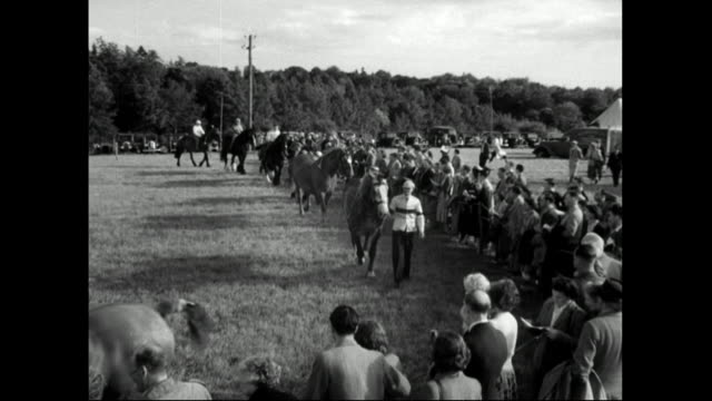 heavy horses being led by handlers in ring;1951 - recreational horse riding stock videos & royalty-free footage