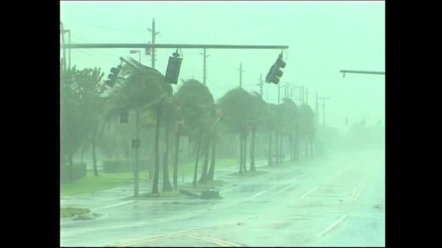 heavy rain and wind blowing palm trees and traffic lights on the street during hurricane dennis - environment or natural disaster or climate change or earthquake or hurricane or extreme weather or oil spill or volcano or tornado or flooding stock videos & royalty-free footage