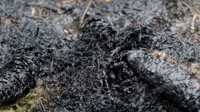 Heavy rain fall on burned forest floor