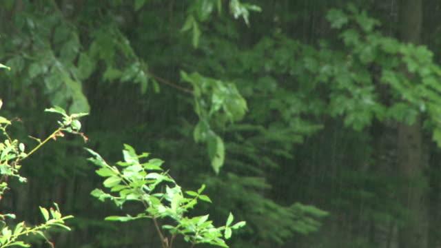 vídeos de stock, filmes e b-roll de heavy rain falling in the woods - sc47