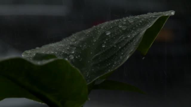 heavy rain falling on a leaf at night - scott mcpartland stock videos & royalty-free footage