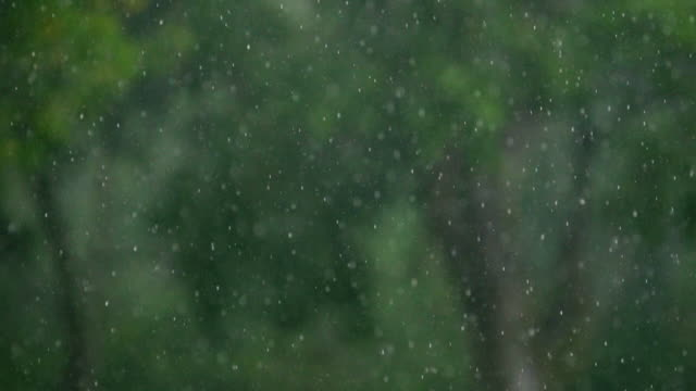"""heavy rain falls in a forest, mexico - """"bbc universal"""" stock videos & royalty-free footage"""
