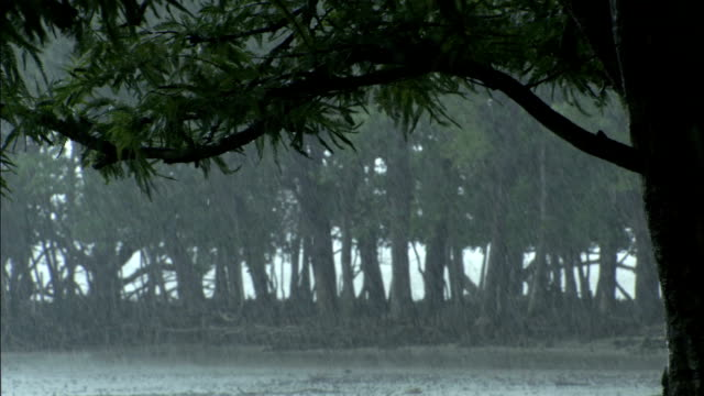vídeos de stock e filmes b-roll de heavy rain falls in sundarbans available in hd. - monção