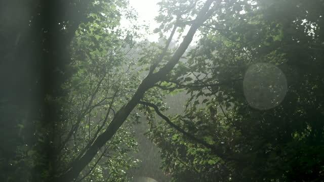 vídeos y material grabado en eventos de stock de heavy rain falls in woodland - cámara movida