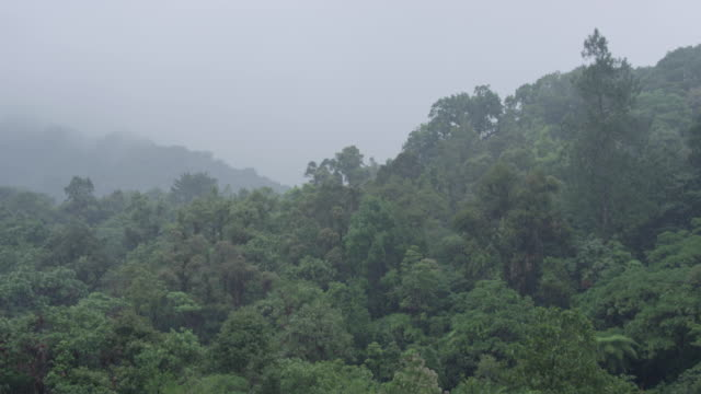 heavy rain falls onto the trees of the el triunfo biosphere reserve in mexico. - torrential rain stock videos & royalty-free footage