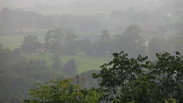 stockvideo's en b-roll-footage met heavy rain in forest - vachtpatroon